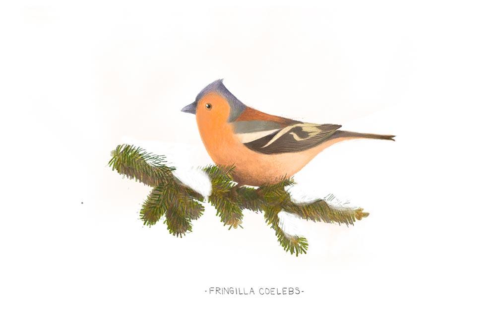 如何用画笔展现自然界中丰富的鸟类?(一)
