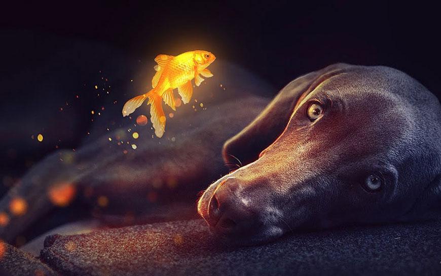 PS教程!教你合成狗狗与金鱼的神秘奇幻场景(含素材下载)