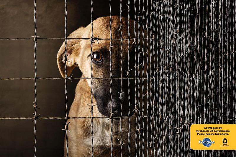 宠物品牌Pedigree海报设计
