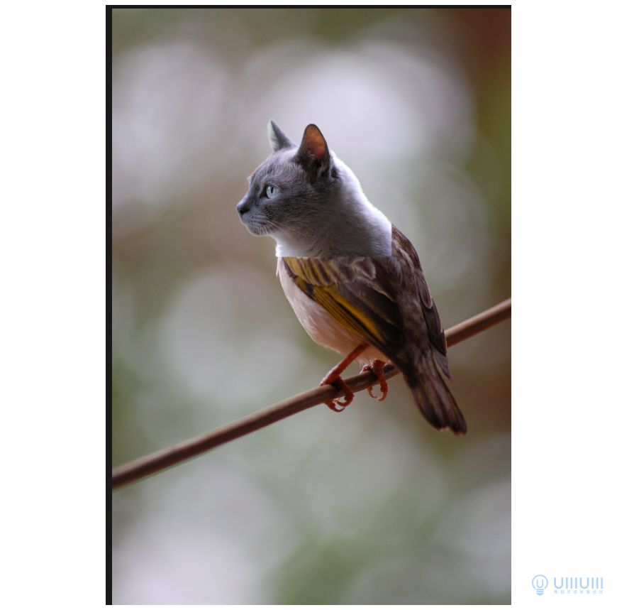 PS教程!有趣的「猫头鹰」动物合成(含素材下载)